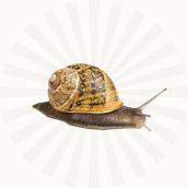 Élevage d'escargots<br />bio dans le Jura